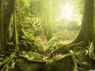 人类只占环球生物量0.01%