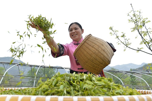 世界茶叶产量年均增长44% 西媒:得益于中国的推动
