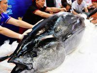 大鱼上桌!中国(福州)国际渔业博览会开幕