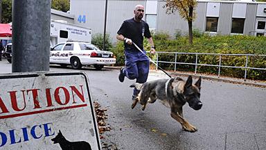 正当盛年却突然辞世,多伦多全体警察为明星警犬致哀