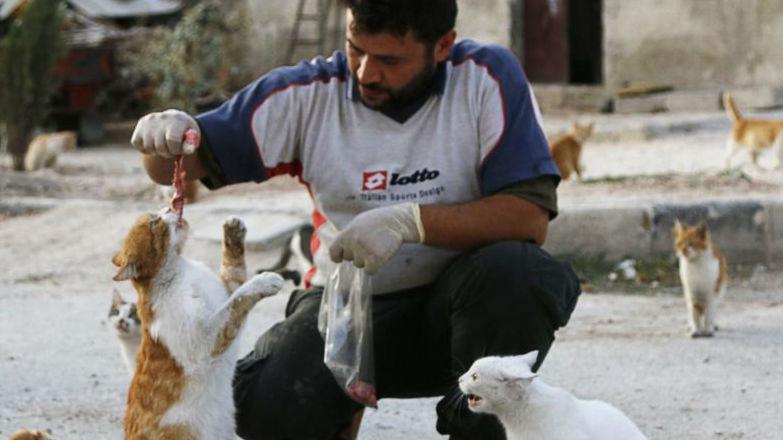法媒:叙利亚人建猫咪庇护所 用战斗机给小猫起名