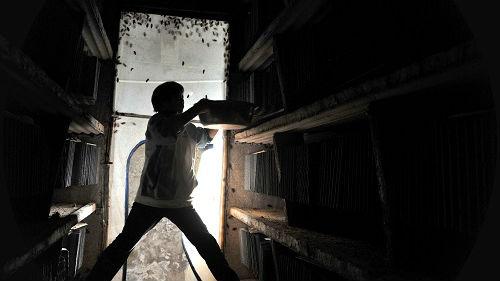 中国数百家养殖场饲养蟑螂 印媒:能处理垃圾还能预防胃癌