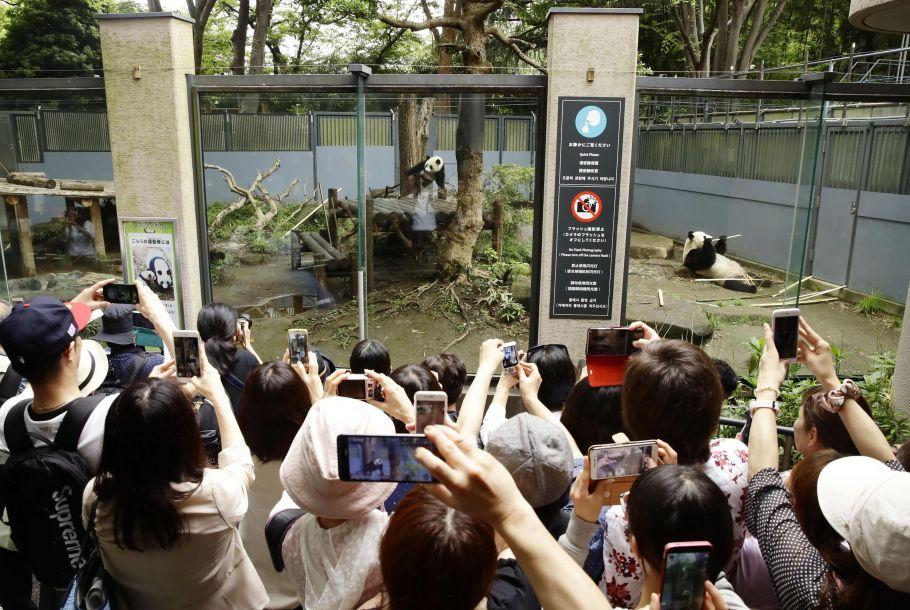 """""""香香""""于去年6月12日诞生,是雄性大熊猫""""力力""""与雌性大熊猫""""真真""""自然交配产下的。上野动物园方面说,香香喜欢爬树,还喜欢吃苹果。(图片来源:视觉中国)"""