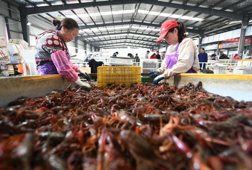 5月8日,湖北省潜江市后湖管理区妇女在该市小龙虾交易中心分拣小龙虾。新华社发