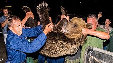 """自由最重要:这头野熊凑到猎人面前又蹦又跳,成匈牙利""""网红"""""""