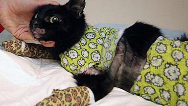 比利时小猫被放入烤箱险遭烤焦 获救后奇迹生还
