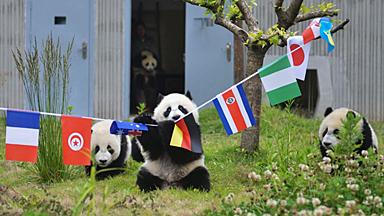 世界杯谁会赢?让动物们告诉你结果