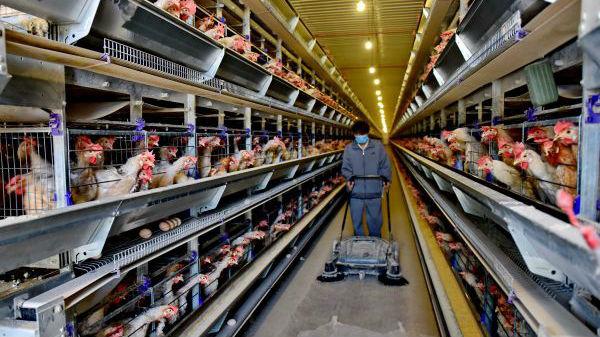 英媒关注中国限制农用抗生素:还须纳入新措施