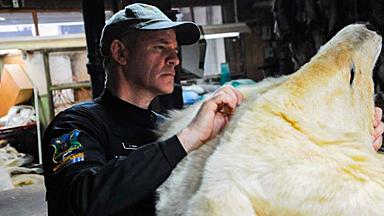 打击动物走私:警方在全球范围展开大搜捕