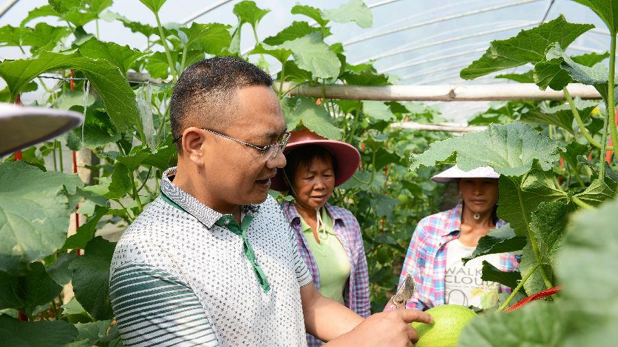西媒称哈密瓜种植助中国农民脱贫:小镇瓜农借力高科技