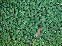 河北唐山:鱼塘变荷塘 带火乡村游
