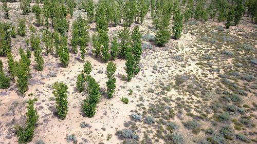 沙漠中种出农作物!外媒:中国技术让阿联酋荒漠变绿