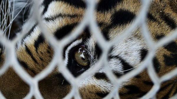 法媒:中国一马戏团靠野兽表演揽客 竟称