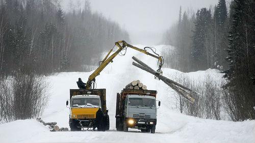 中国人是砍光俄罗斯森林的元凶?俄媒这样说——