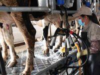 云南寻甸:奶牛养殖企业带动农民脱贫增收