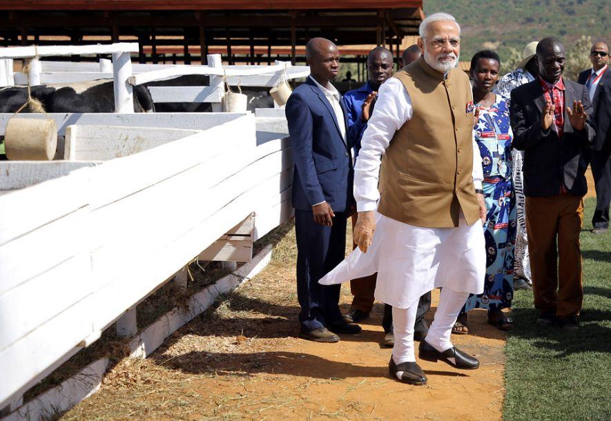 """印度总理莫迪首访卢旺达 200头奶牛当""""国礼"""""""