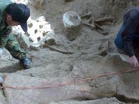 """中国发现""""神奇灵武龙""""化石 改写恐龙谱系历史"""