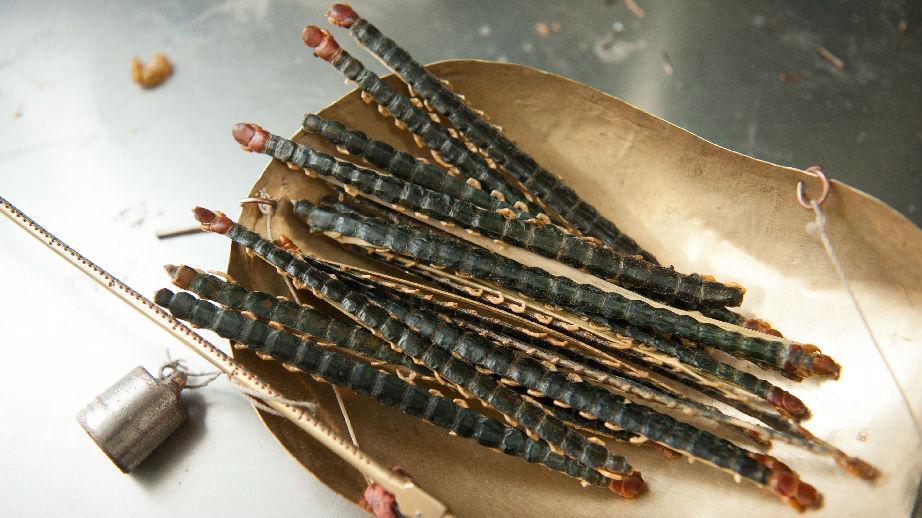 中国两患者感染危险寄生虫 港媒:他们以为生吃蜈蚣有益健康