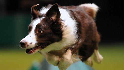 美媒析中国年轻人为何挚爱宠物狗:将溺爱转移到宠物身上