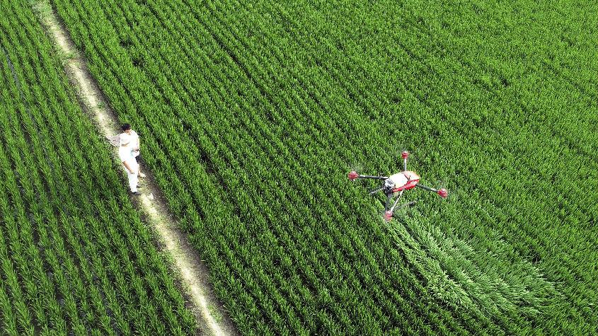 印媒:中印呼吁发达国家削减农业补贴 遵守多边贸易规则