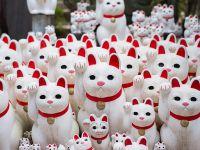 """萌萌哒:日本东京豪德寺里的""""招财猫"""""""