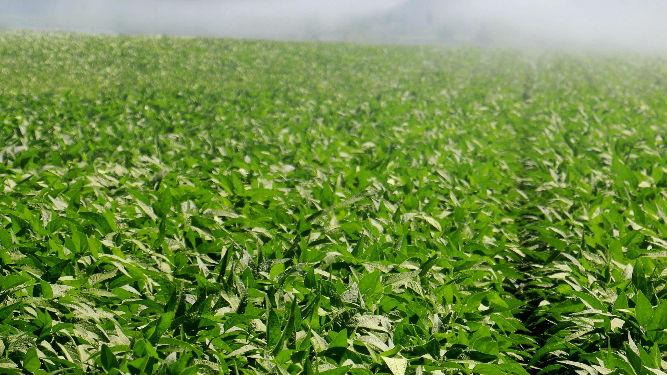 俄媒:俄罗斯拟出租100万公顷远东土地 中国农场主最感兴趣