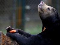 救救它们!探访越南的黑熊救助中心