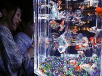 """日本东京举办艺术展 8000条鱼儿在水族箱中""""如梦似幻"""""""