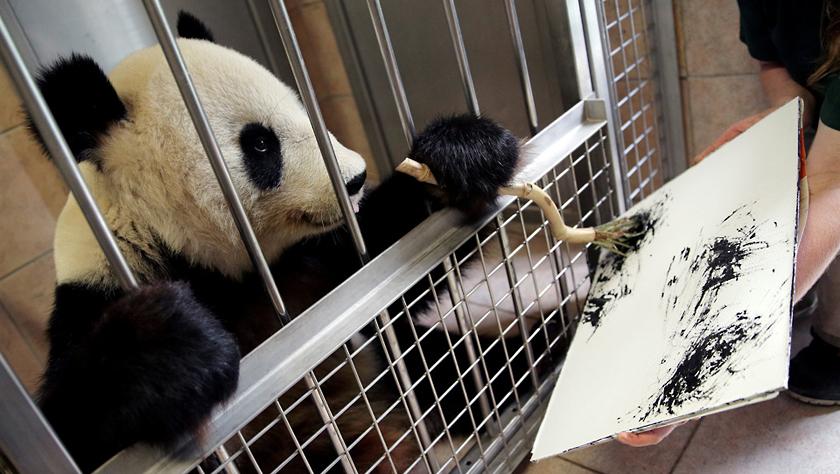 """奥地利大熊猫""""挥毫作画"""" 每幅作品售价490欧元"""