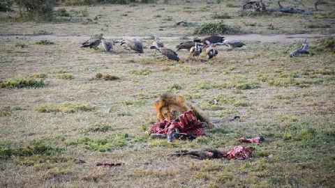 英媒赞中国环保基金会为非洲巡护员设奖:有助遏制偷猎行为