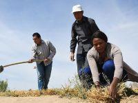 纳米比亚学员在中国学治沙