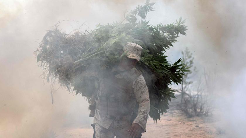 墨西哥军方捣毁大面积大麻种植园