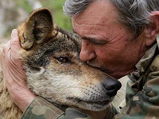 """他不愿做莫雷纳山脉的""""明星狼人"""""""