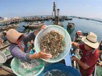 黄渤海伏季休渔期结束