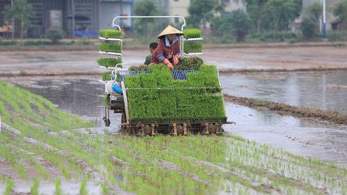 外媒称中国40年农业改革成就显著:同时也面临新挑战