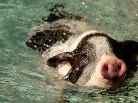"""小猪运动会""""萌""""趣横生"""