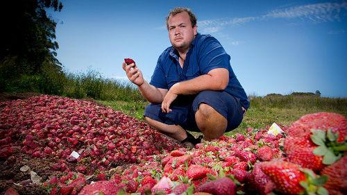 """澳警方逮捕一名""""草莓藏针""""嫌犯:后者称是恶作剧"""