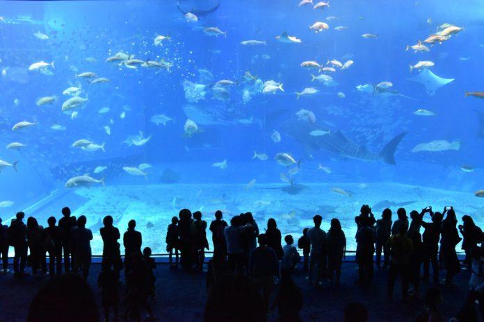 和鲨鱼一起浮潜:世界上最震撼的水族馆
