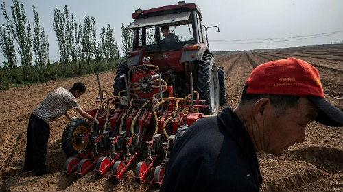 美媒称中国农村正发生巨变:从家庭农户到大型农场