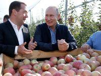 普京和梅德韦杰夫视察苹果园 称要让埃及总统尝一尝