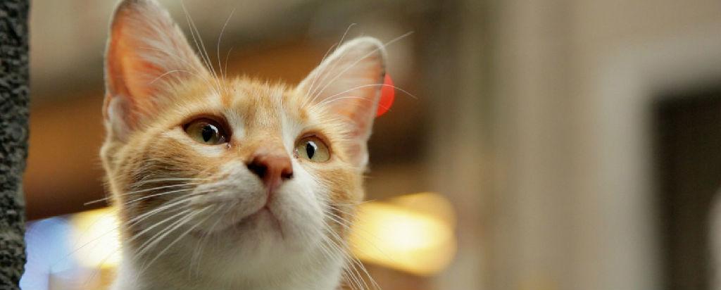 《爱猫之城》:这部纪录片里有最美的城、猫、人