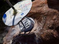 """再见""""圆帐篷"""":新科技正在改变蒙古国传统生活方式"""