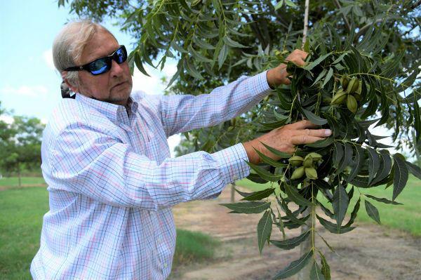 美媒:貿易戰對美農業沖擊擴大 特朗普救助美農民或惠及中企