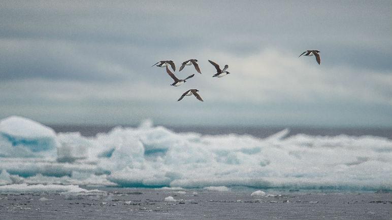 """港媒:中国将目光投向北极航线 """"冰上丝路""""正在成形"""