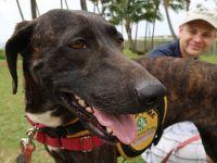 遛狗圣地:夏威夷这里的狗狗可出租可领养