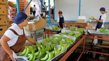 """菲律宾香蕉""""北上""""记"""