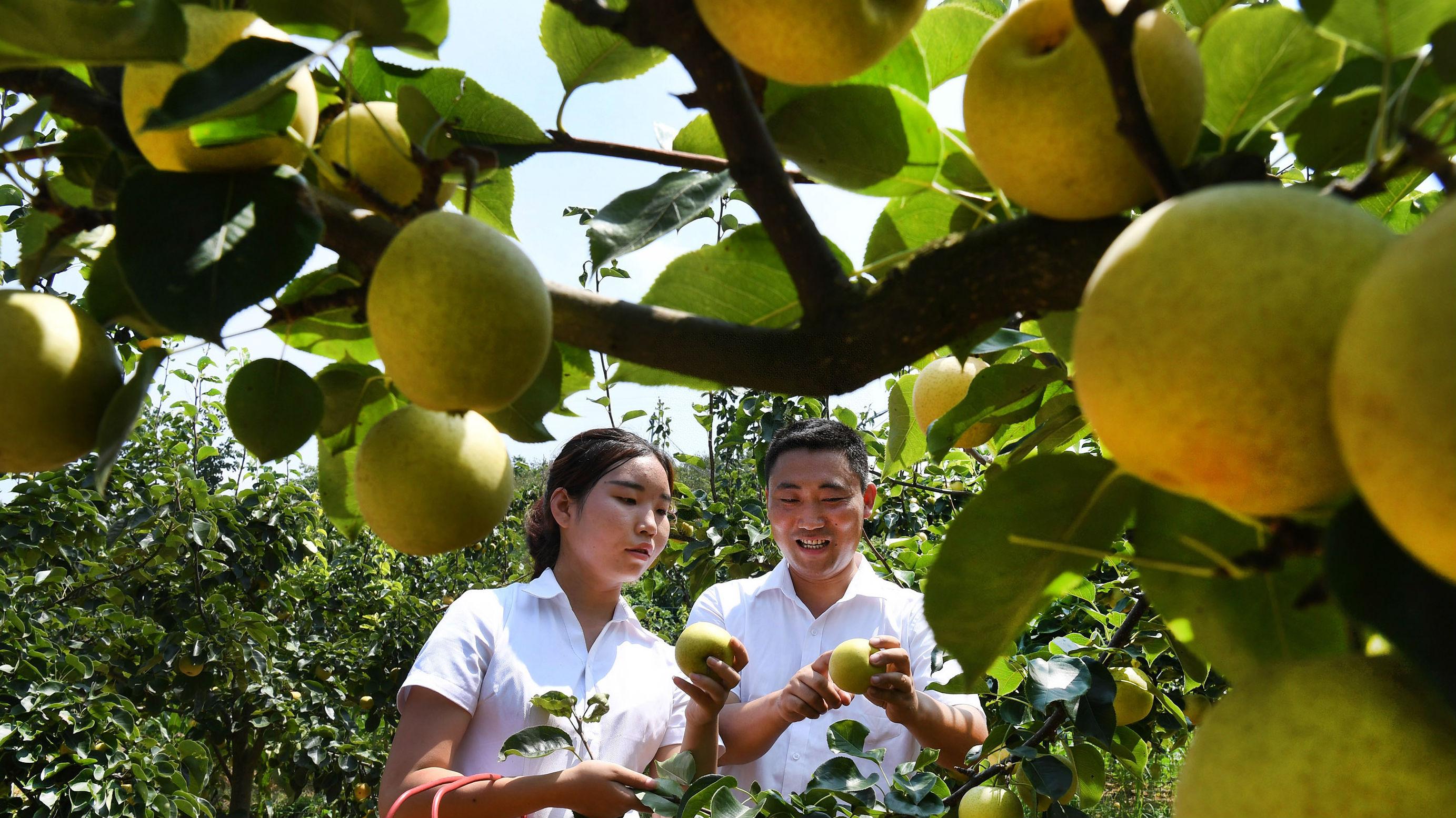 中日民间在有机农业领域寻找商机 日媒:可展现各自所长