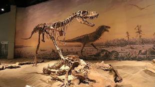 新时代国门行(28):恐龙化石让延吉有了新名片