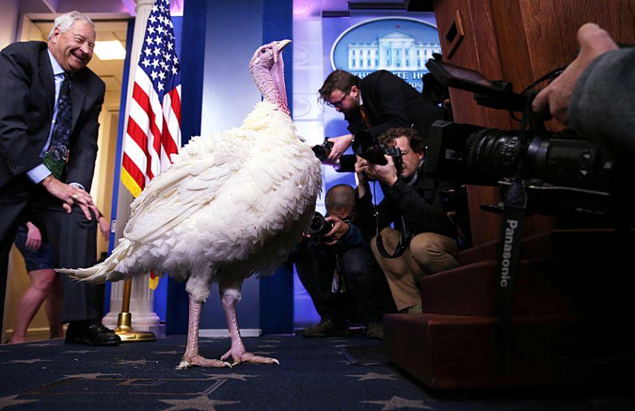 火鸡在得到特朗普赦免前接受媒体追捧。(图片来源:路透社)