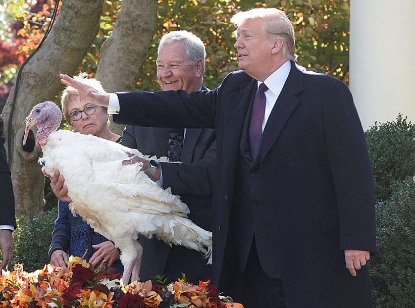 特朗普特赦感恩节火鸡 花式嘲讽民主党